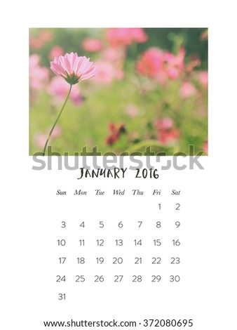 Photo calendar 2016, january, beautiful pink flower cosmos in the field - stock photo