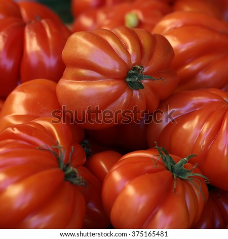 Photo closeup many clean organic fresh tasty ripe red tomatoes crop fruit full of vitamin for healthy eating diet ball form for sale on natural background, square picture - stock photo