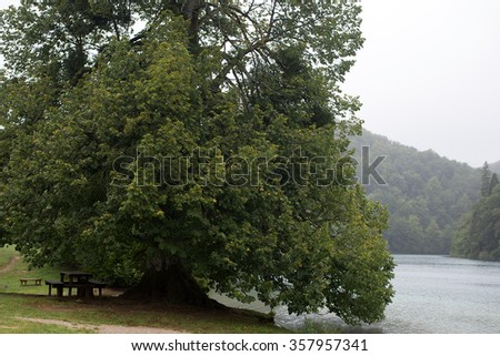 Photo closeup of picturesque one big old broad-crowned green tree on river side natural beauty outdoor leisure area on summer landscape background, horizontal picture  - stock photo