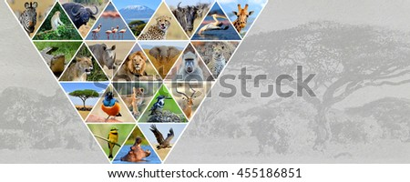 Photo collage african animals. Travel concept - stock photo