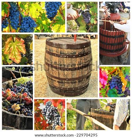 Photo collage of grape-picking season - stock photo