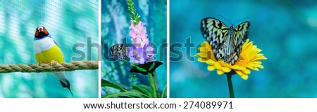 photo collection a little bird and tropical butterflies - stock photo