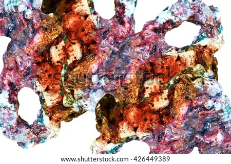 Photo corals under a microscope. Perfect for medicine, as an illustration of human connective tissues, blood  capillaries and veins. Bright colors and beautiful exquisite shades decorate any project. - stock photo