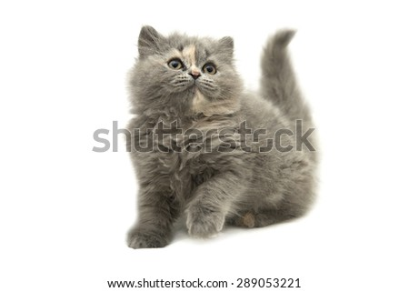 Photo funny fluffy kitten