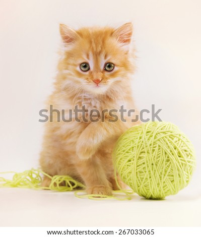 Photo kitten that Flashes with arm rests - stock photo
