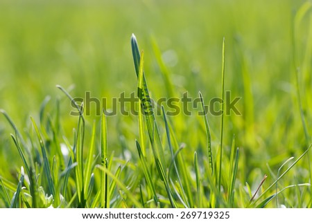 Photo lush green lawn in sunlight.  - stock photo