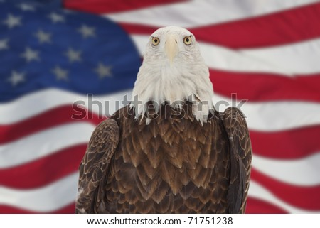 photo of a bald eagle against american flag background - stock photo