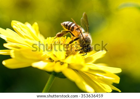 photo of a beautiful bee and flowers a sunny day. - stock photo