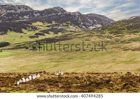 photo of a beautiful scenic irish landscape - stock photo