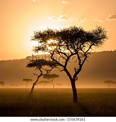 Photo of a beautiful sunset in Massai Mara, Kenya (square frame) - stock photo