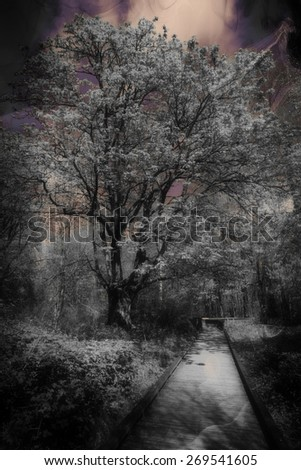 stock-photo-photo-of-a-boardwalk-in-the-woods-in-spring-ghostly-filter-applied-269541605.jpg