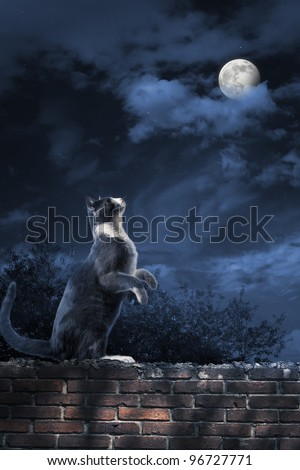 photo of a cat looking at the moon - stock photo