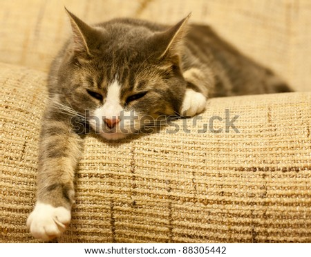 Photo of a cat on a settee - stock photo