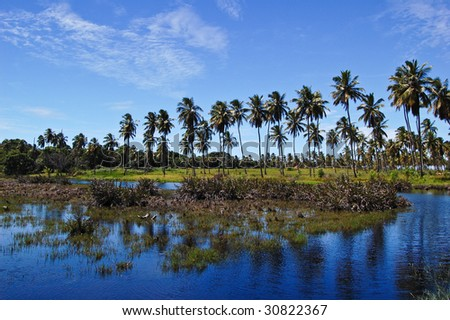 Photo of a Coconut Landscape