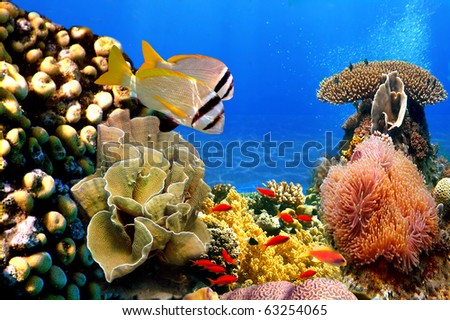 Photo of a coral colony and Doublebar bream - stock photo