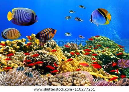 Photo of a coral colony on a reef,  Red Sea, Egypt - stock photo
