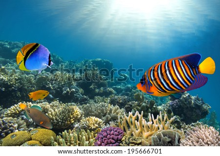 Photo of a coral colony on a reef top - stock photo