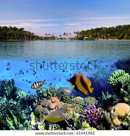 Photo of a coral colony on a reef top, Koh Cahg island, Thailand - stock photo