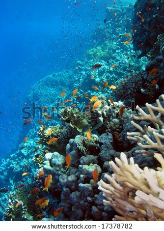 Photo of a coral colony, Red sea - stock photo