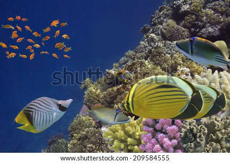 Photo of a coral colony, Red Sea, Egypt - stock photo