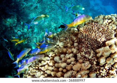 Photo of a coral fish