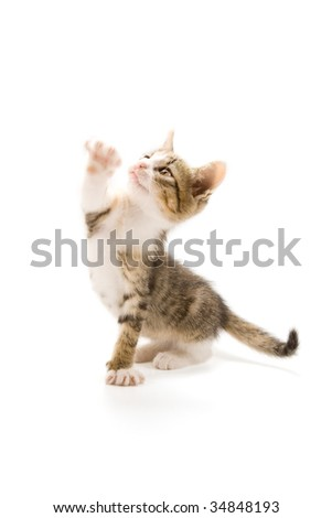 Photo of a cute kitten isolated on white