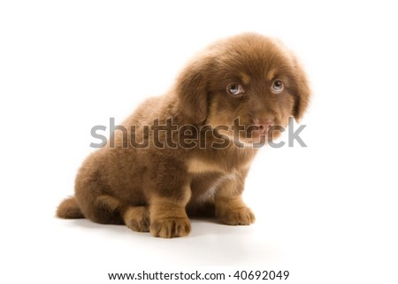 Photo of a cute puppy isolated on white background
