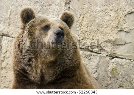 photo of a grizzly brown bear in the park