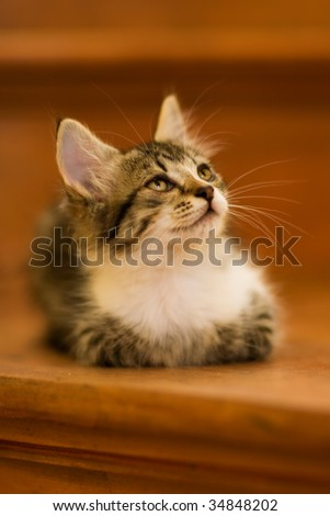 Photo of a kitten - Shallow DOF, focus on the eyes - stock photo
