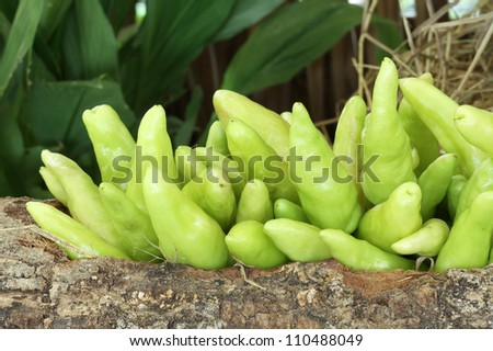 Photo of a large group of vegetables on straw - stock photo