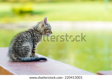 Photo of a little kitty sitting on a bench - stock photo