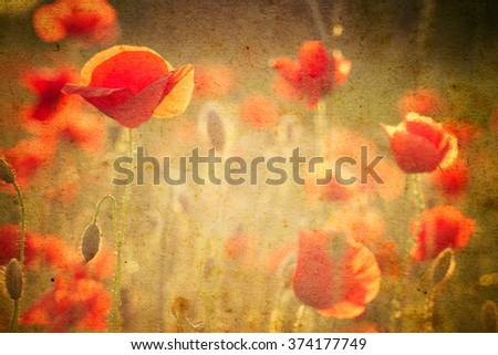 Photo of a poppies flowers  on a grunge background - stock photo