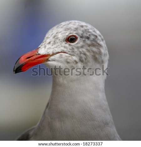 Photo of a Seagull - stock photo