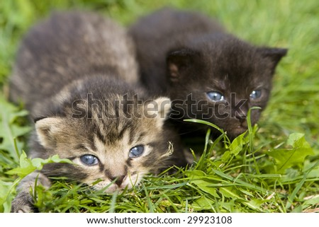 Photo of a small kitty on the green grass