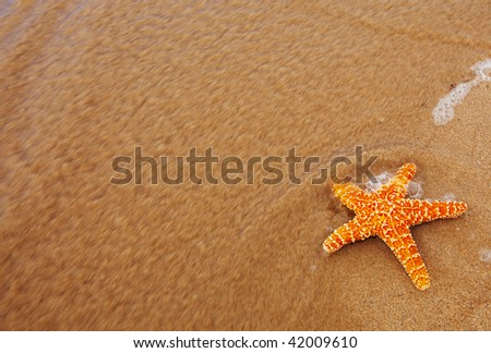 photo of a starfish washed out of the ocean