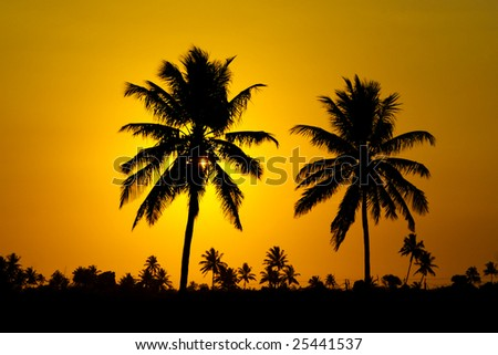 Photo of a sunset in Africa (Mozambique - Machanga) behind palm trees