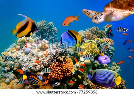 Photo of a tropical fish and turtle on a coral reef