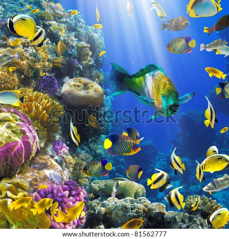 Photo of a tropical Fish on a coral reef - stock photo