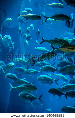 Photo of a tropical fish on a coral reef in Dubai aquarium