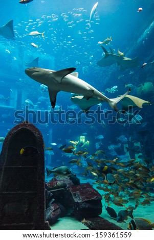 Photo of a tropical fish on a coral reef in Dubai aquarium - stock photo