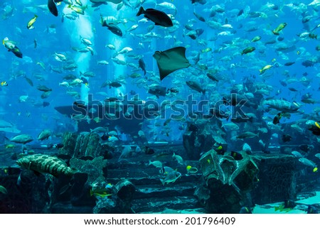 Photo of a tropical fish on a coral reef in Dubai aquarium. Stingray fish - stock photo