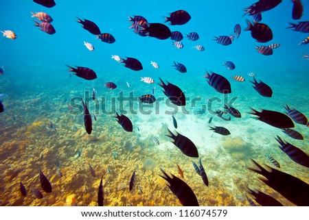 Photo of a tropical fishes on coral reef area - stock photo