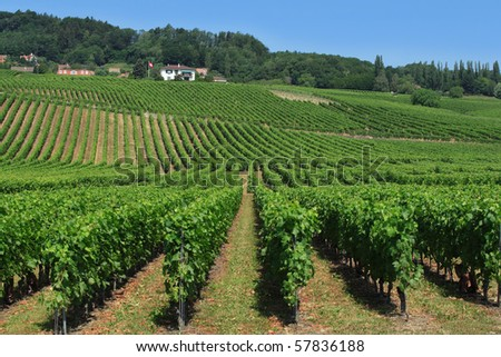 Photo of a vineyard in the countryside of Switzerland.