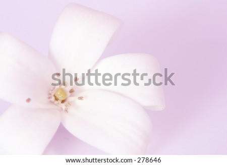 Photo of a white flower with a mauve background.