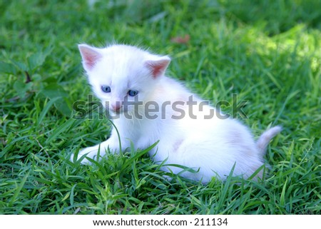 Photo of a white kitten lying on green grass.