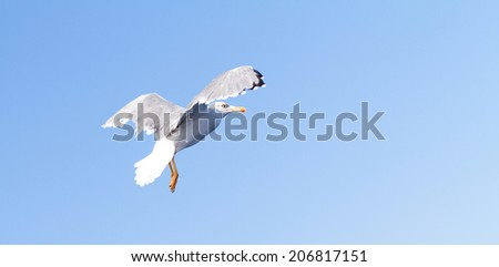 Photo of a white seagull when fly  - stock photo