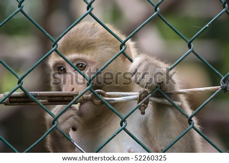 photo of a wild cute monkey at the zoo