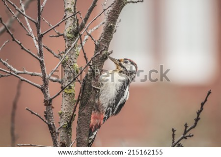 Photo of a woodpecker on a tree branch