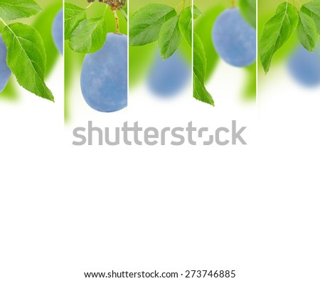 Photo of abstract plum mix with white space for text - stock photo