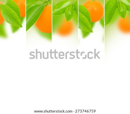 Photo of abstract tangerine mix with white space for text - stock photo